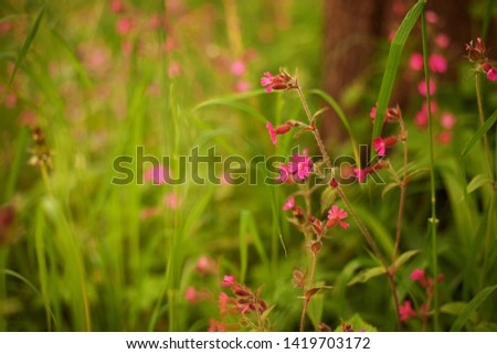 Little pink flowers in the green grass. Beautiful background. Background Images.Pretty Background. Flower Images. Flower Backgrounds. Pictures of Spring. Nature Pictures