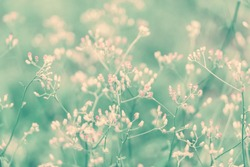 little pink grass wild flower ,Abstract spring nature background