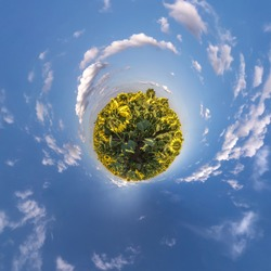 Little planet transformation of spherical panorama 360 degrees. Spherical abstract aerial view in sunflowers field with clear sky and awesome beautiful clouds. Curvature of space.