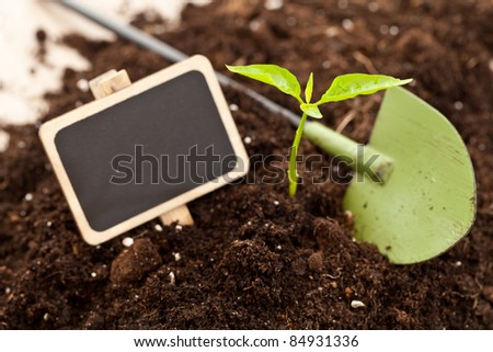 Little plant growing in a fresh soil