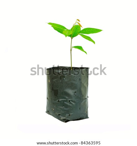 Little plant in a black pot . Isolated on white background.