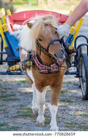 Little pony carries a cart #770828659