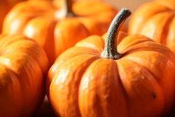 Little pumpkins close-up. Selective focus, shallow DOF.
