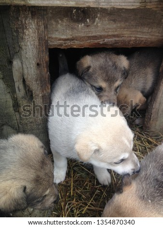 little puppies around the booth. Street dogs. purebred dog #1354870340