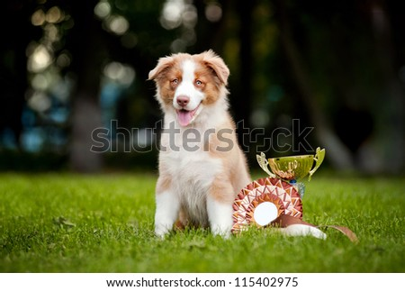 little puppy and his award cup on the grass