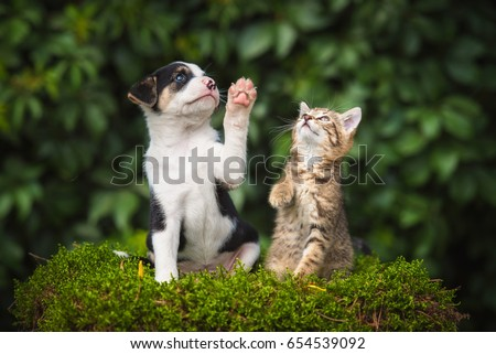 Little puppy with a little tabby kitten