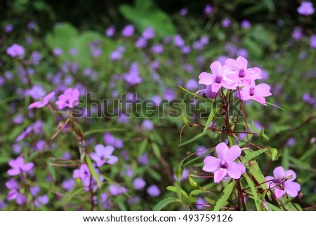 Purple flowers on the background blurred ez canvas mightylinksfo