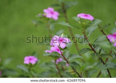 Little Purple Flowers Ez Canvas