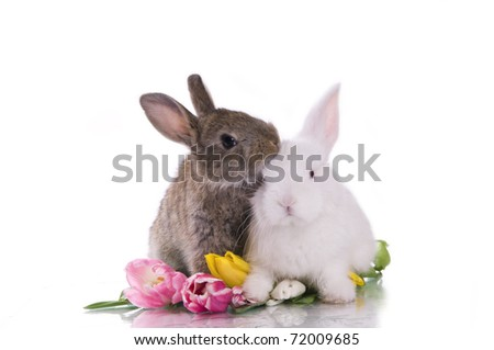 little rabbit and flowers on a white background isolation - stock photo