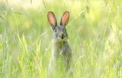 Little rabbit on green grass in summer day .