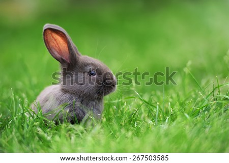 Little rabbit on green grass in summer day #267503585