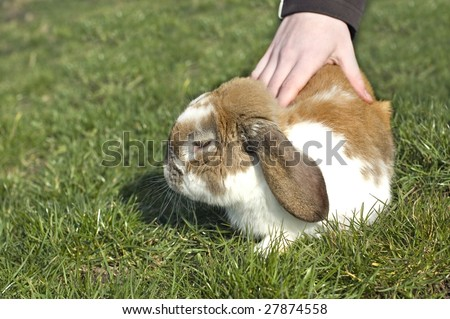 Little rabbit with floppy ears sitting in the grass