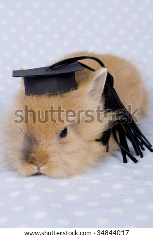 little rabbit with graduated hat
