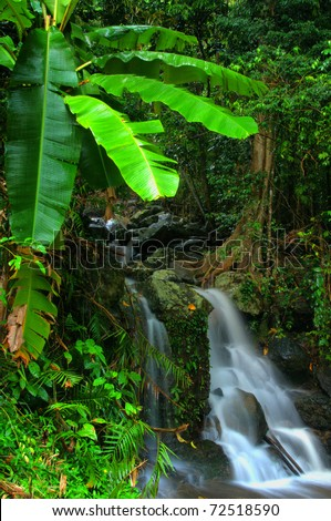 little rainforest waterfall near Cairns, Queensland, Australia