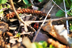 little red bug on forest floor