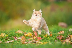 Little red cat playing in the leaves in autumn