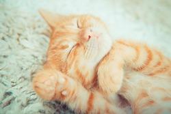 Little red kitten. Cute little kitten. ginger kitten.  kitten lies on the fluffy carpet at home.  Close-up of a sleeping cat