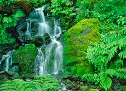 Little Redwood Creek Falls is surrounded by lush foliage and ferns in Siskiyou National Forest in Brookings, Oregon.
