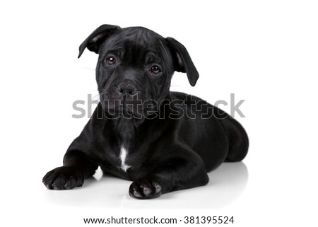 Little sad black puppy on a white background #381395524