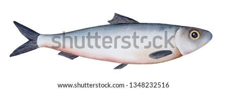 Little sea fish watercolour illustration (atlantic herring, sardine, sprat). Silver  scales, yellow eye, grey fins and tail. Handdrawn water color sketchy drawing, cutout clipart element for design.