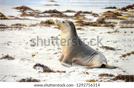 Little seal on beach. Seal baby on beach. Seal on beach