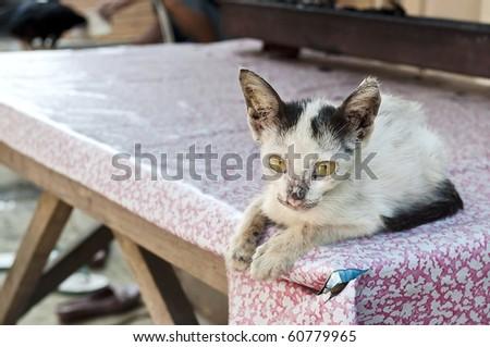 Little sick cat on a table watching me in Jakarta street