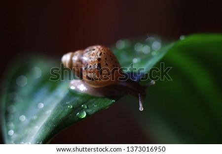 little snail on a green leaf #1373016950