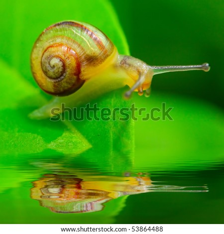 Little snail on green leaf over garden pool. Macro shot with shallow dof ( snail is 7mm sized )