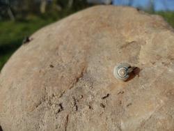 little snail sliding on brown salt stone