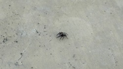 Little spider crawling on a concrete wall.