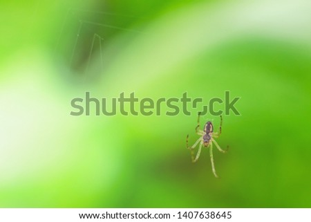 Little spider is crawling on the web against the background of bright green. Macro photography, summer natural concept. Insects in nature, macrocosm. Phobia spiders. Copy space. World environment day. #1407638645