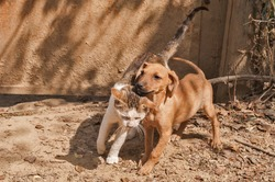 Little stray mongrel dog and young street cat closeup as friends