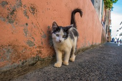 Little Street Cat, posing for photography on a Pelourinho street in Salvador, Brazil