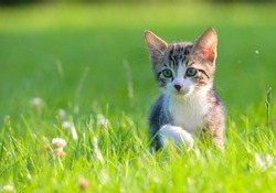 Little striped kitten hiding in the grass