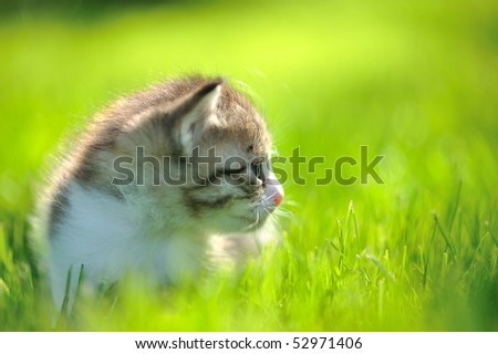 Little stripped kitten sitting in the grass turned sideways