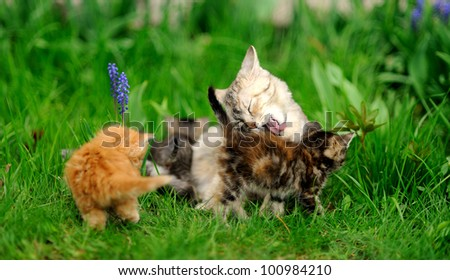 little tabby kittens with mother cat on green grass