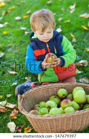 Little toddler boy eating apple in autumn garden