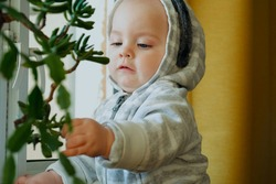 Little toddler boy standing on his feet touching house plant at home. Baby discovering the world.