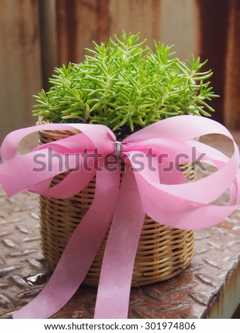 Little tree in the basket gift