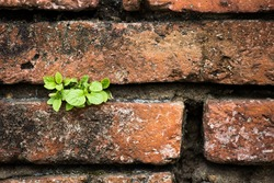 Little tree that grows in the wall of brown brick.
