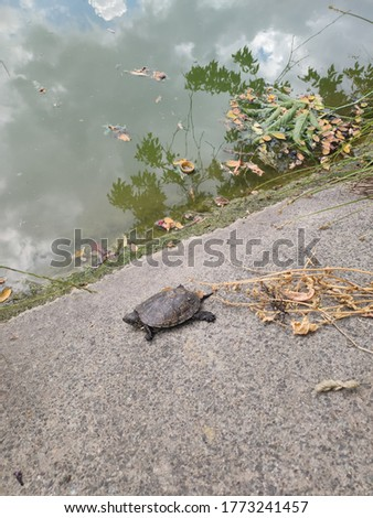 little turtle near the lake in park