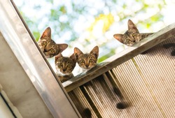 little 4 twin cats on the roof
