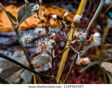 Little white and orange flowers wallpaper #1169964397