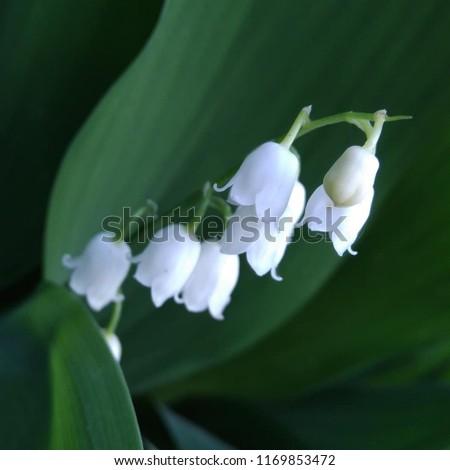 Free photos flowers like bells avopix little white bell like flowers 1169853472 mightylinksfo