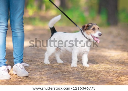 Little white-brow dog walking on a leash in a summer park #1216346773