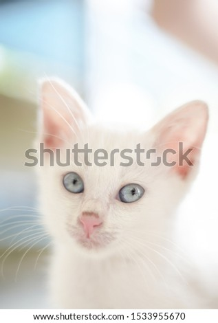 little white cat with dramatic tone #1533955670