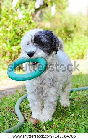 little white dog with toy for fitness in the month