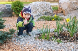Little white kid shows up hi in the flower bed with daffodils.