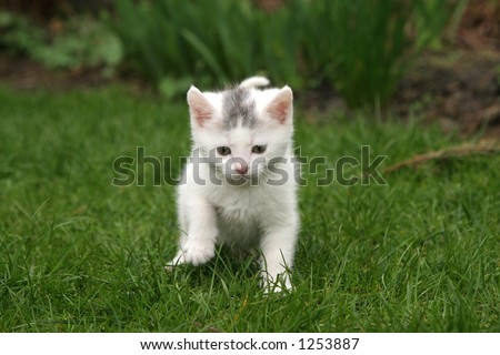 Little white kitten in the garden - stock photo