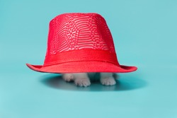 little white kitten is hiding under a red hat on a turquoise background